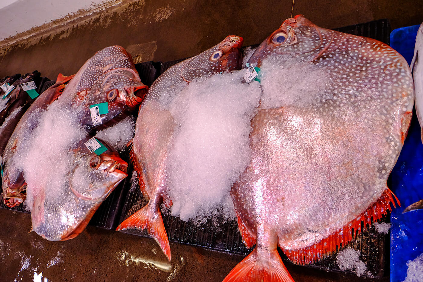 A big fish tale the honolulu fish auction the expat for Safest fish to eat
