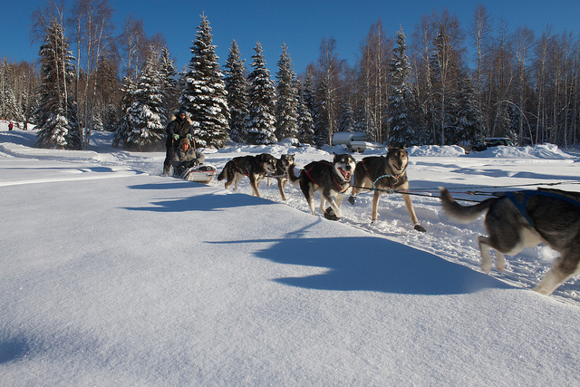 South Lake Tahoe winter Dog Sledding