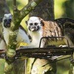Living Costs Panama: 6 Months in Los Altos de Cerro Azul