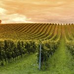 Wine Tasting Destinations For Every Budget