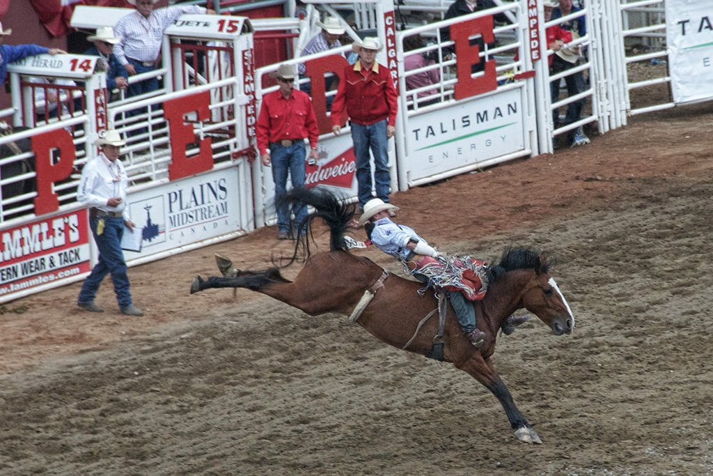 The rodeo at the Calgary Stampede- attractions in Calgary