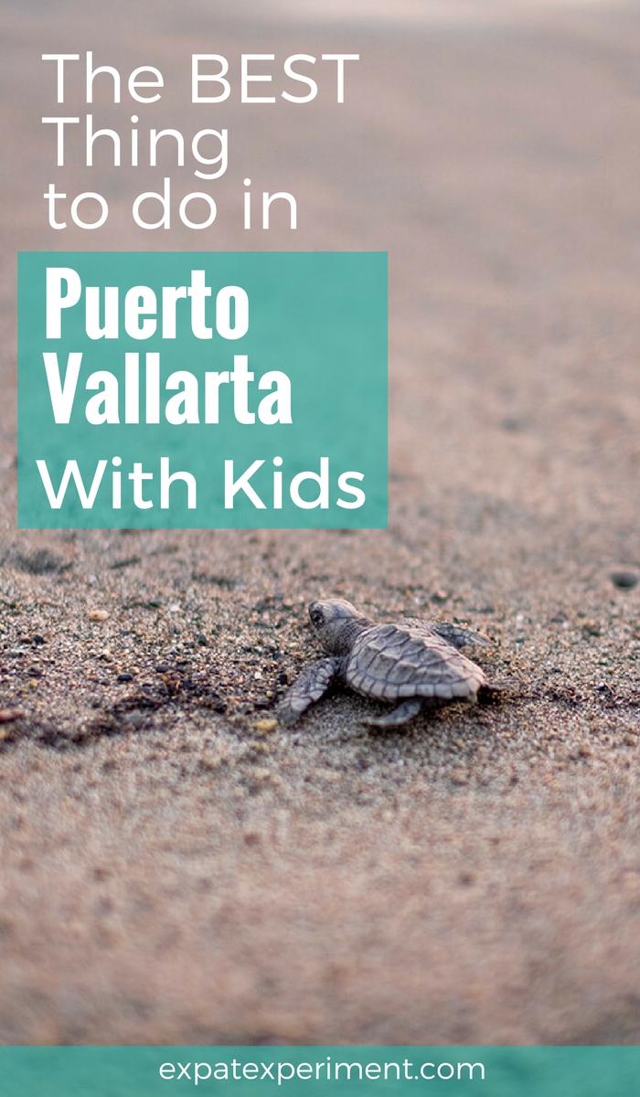 Turtle Release Puerto Vallarta- The Expat Experiement