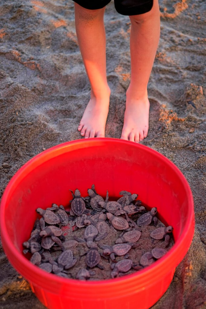 The freshly hatched baby turtles!- the best thing to do in Puerto Vallarta with kids.