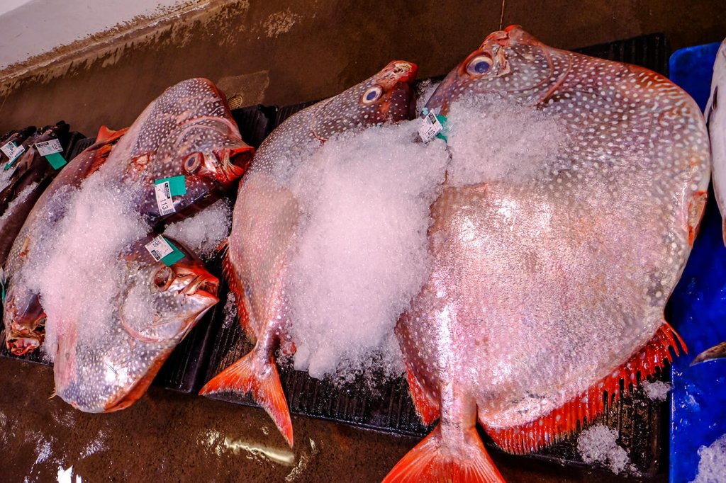 Moonfish - Opah