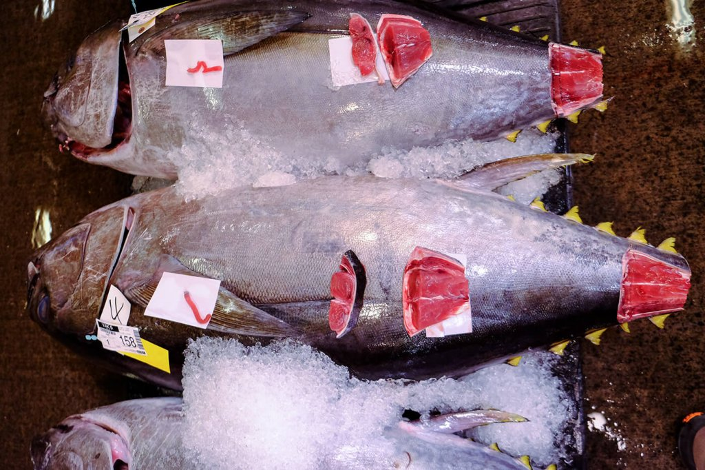 Yellow fin tuna is graded for quality.