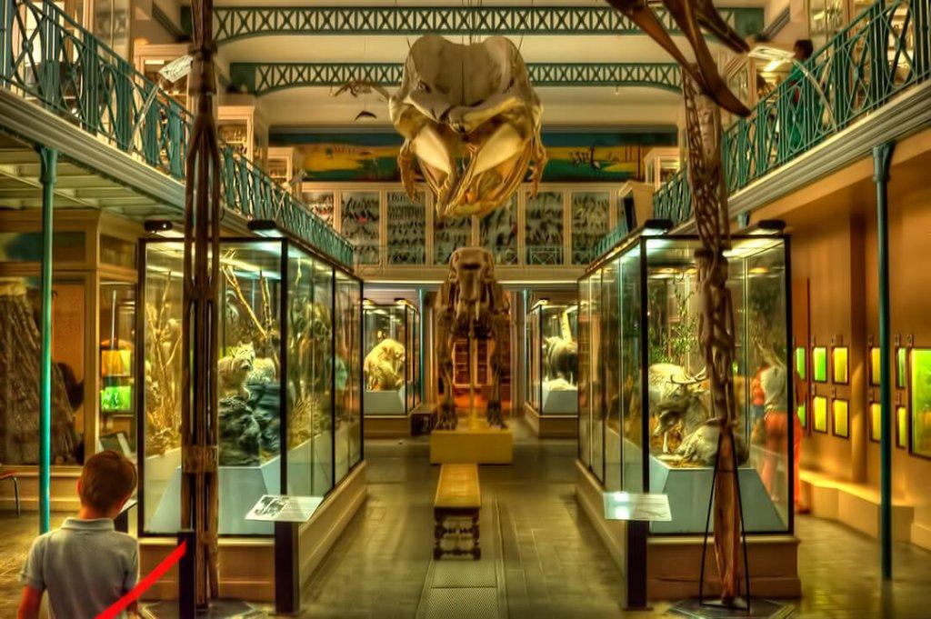 Musée d'Histoire Naturelle de Lille- 48 hours in Lille