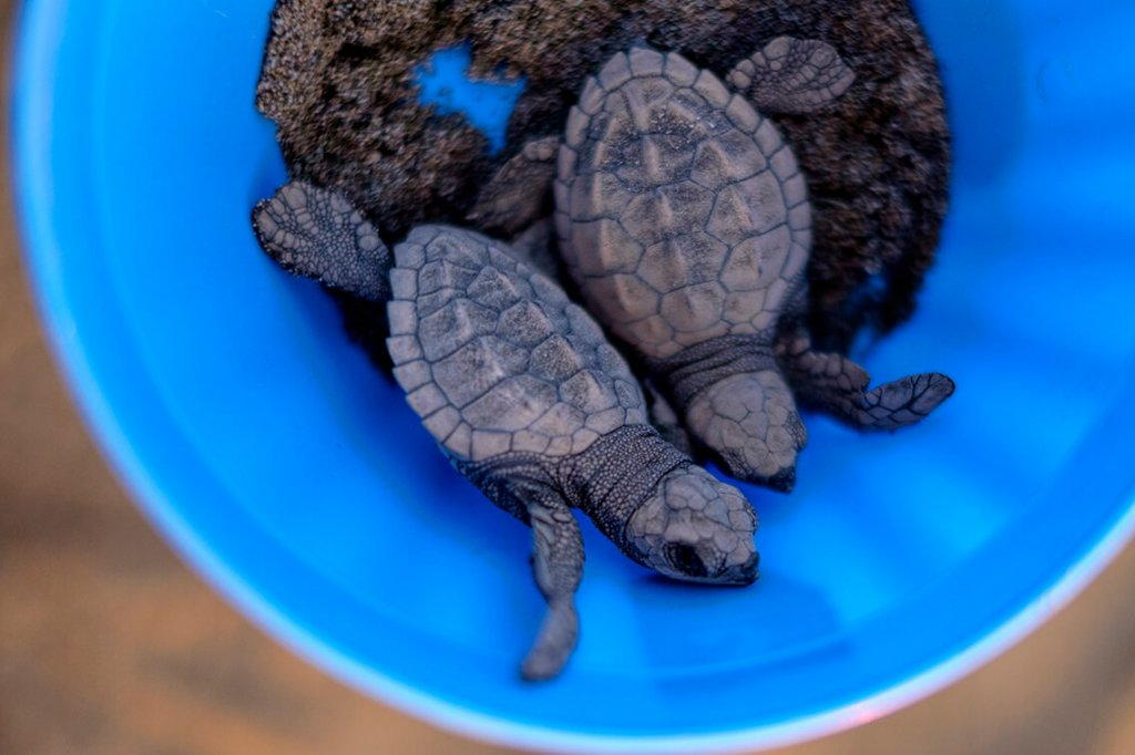Mak's babies- the best thing to do in Puerto Vallarta with kids