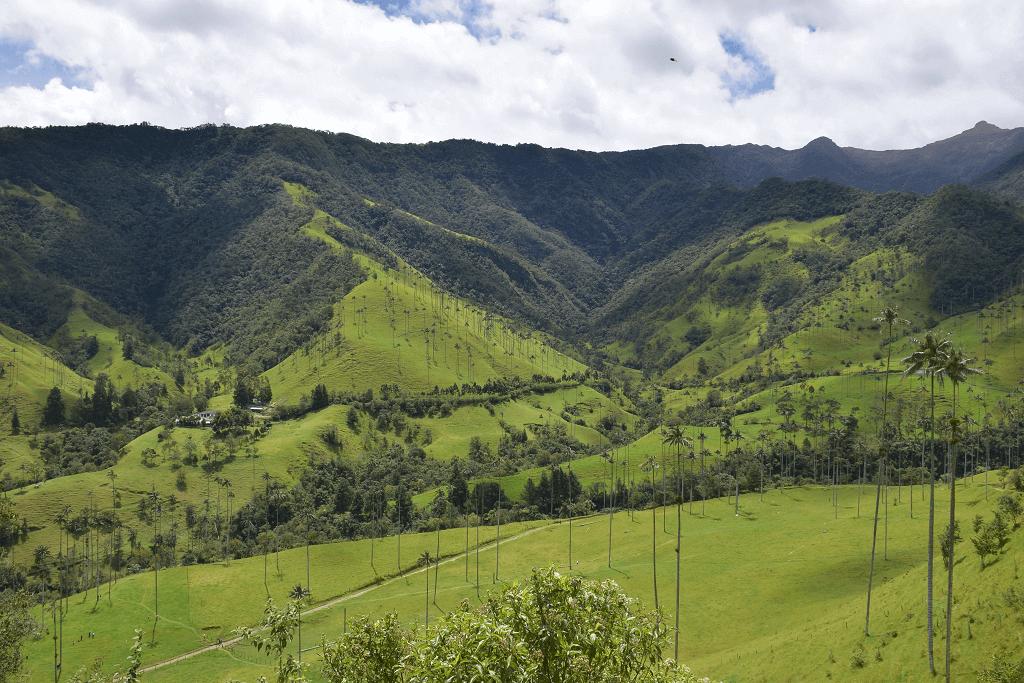 Valle de Cocora Wax Palms