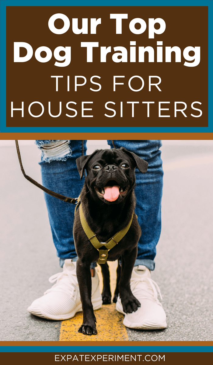Best dog training tips for house sitters