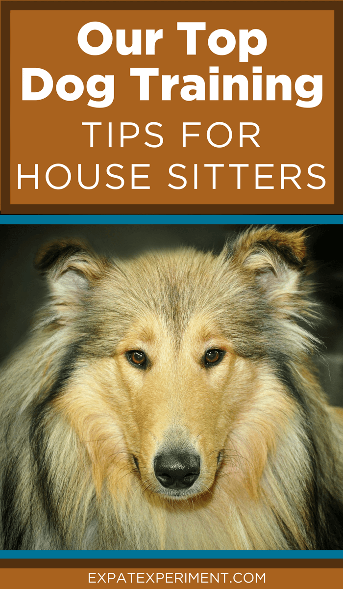 We've looked after all kinds of dogs house sitting; big and small, naughty and nice. Here are our top dog training tip for house sitters. The could make dealling with dog behavior issues a lot easier you next dog sit.
